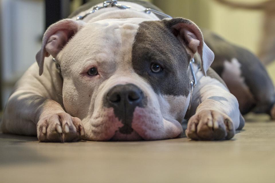 ¿Puedo incluir el seguro de animales peligrosos dentro de la póliza de hogar?